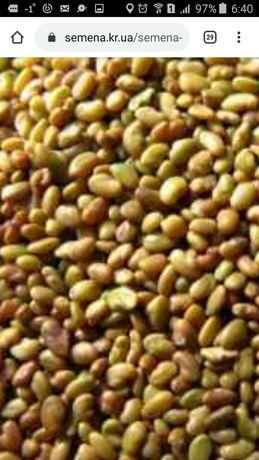 Семена люцеркны магнічена .