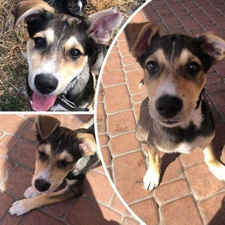 Собака Риченька, активная, игривая собачка, 10 мес