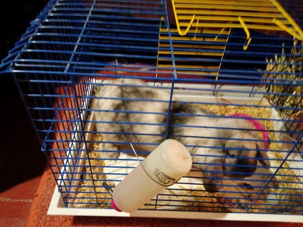Продам кролика вместе с клеткой