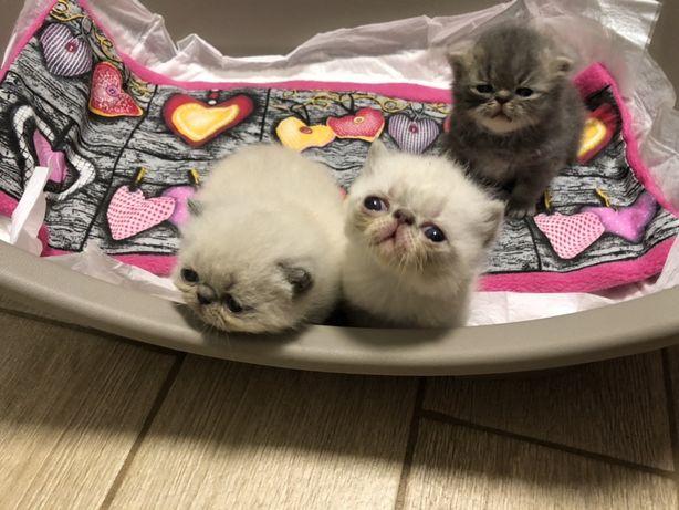 В питомнике подрастают котята