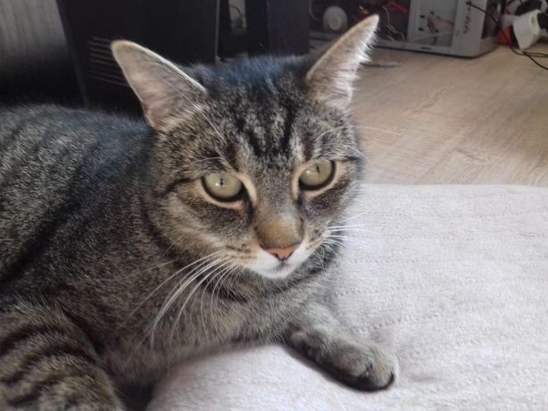 Zaginął kot Hanyś. Nagroda za pomoc 500PLN