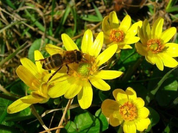 Пчелосемьи и отводки