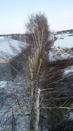 Wycinka drzew trudnych, karczowanie,usługi rębakiem
