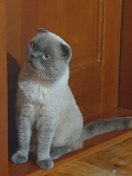 Котик ждёт Кошечку!