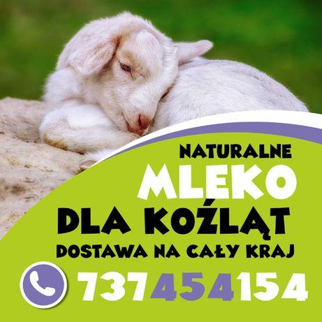 mleko w proszku jagnięta kozleta alpaki lamy daniele kurier cała Polsk
