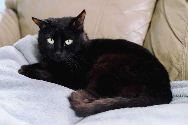 Кардинал - приятнейший черный кот в добрые руки