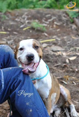 Para adoção: Popeye