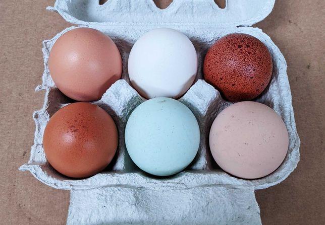 Ovos caseiros de galinhas criadas ao ar livre