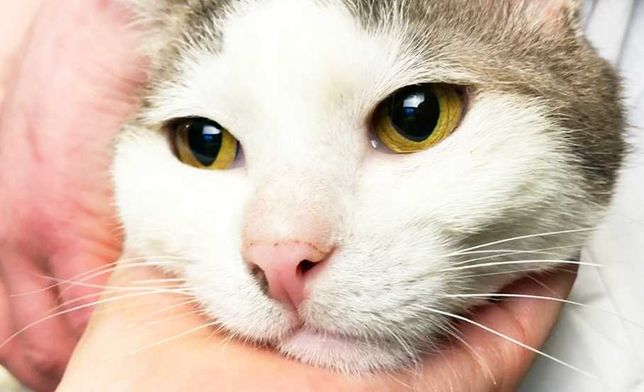 Шерстяной комок счастья Филя 1 годик (кот, коты, котята, котенок)