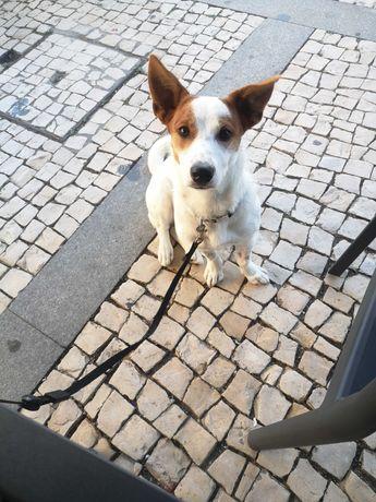Masha - Cachorro cadela para adoção - muito especial < 3