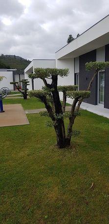 Limpeza de terrenos,jardins,condomínios corte de lenha para lareira ..