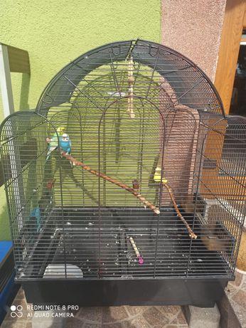Papużki faliste parka