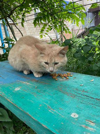 Нашли рыжего кота с ошейником