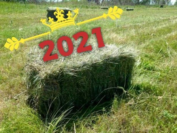 От 1-го тюка сено(сіно) в тюках 2021. БЕЗ ПРЕДОПЛАТ