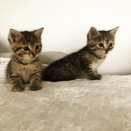 Oddam Koty za darmo!