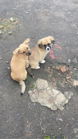 Віддам собак у добрі руки