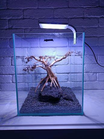 Drzewko do akwarium