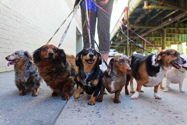 Petsitting e dogwalking