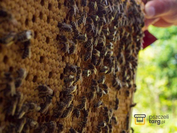 Odkład pszczeli 5 ramek Ostrowskiej