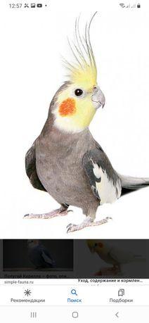 Продаём попугаев  разных видов