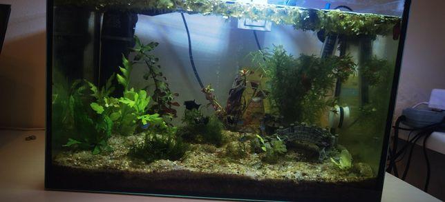 Akwarium Akwarium