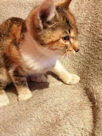 Mała kotka
