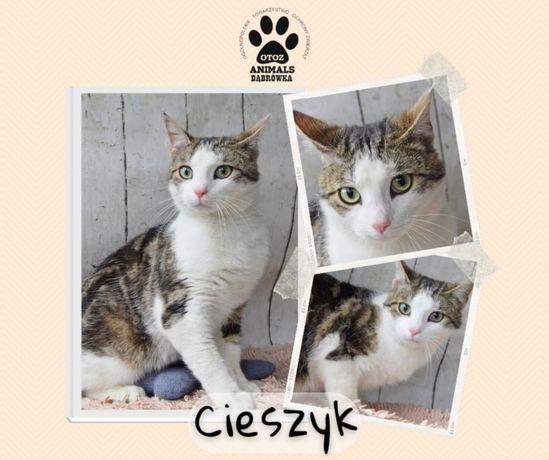 Znaleziono biało szarego kota-Cieszyk gotowy do adopcji!
