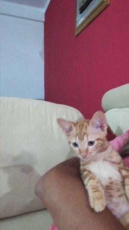 Dou gatinhos para adoçao responsável