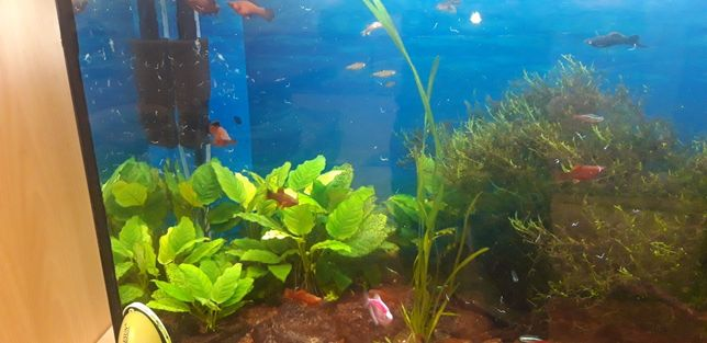 Akwarium ryby i wyposażenie