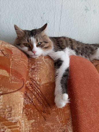 Потерялся котик Кузенька,2 годика
