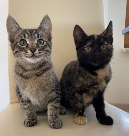 Kot i Kotka szukają kochającego domu