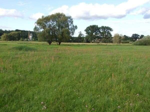 Użycze łąki 50 ha.