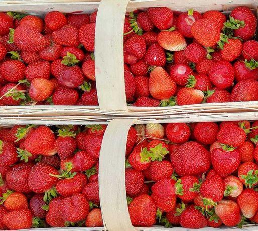 Olsztynek Świeże duże i słodkie truskawki 8zł/kg