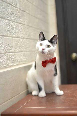 віддам котика, дуже ніжний, кастрований