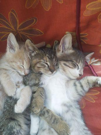 Дайте шанс выжить !!! Котята-малыши ищут добрые руки !!!