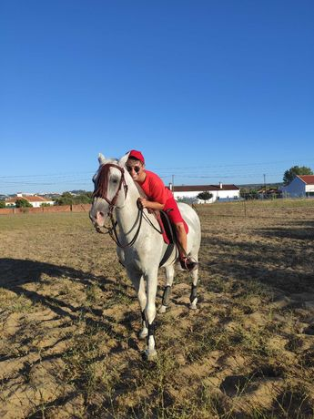 Cavalo luso-árabe