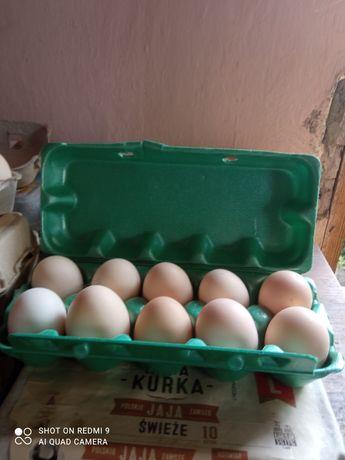 Jaja swojskie, jajka eko