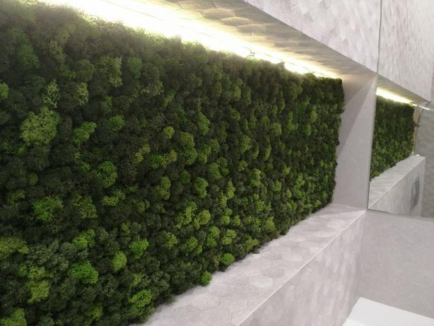 Освіжаємо простір. Декоруємо стабілізованим мохом. Стабілізований мох
