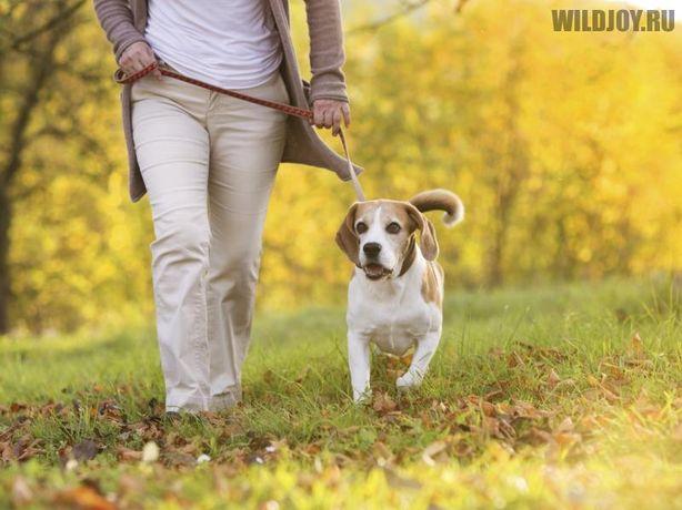 Прогулка с вашим питомцем, помощь по хозяйству