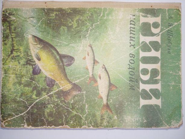 Книга Риби наших водойм А Щербуха