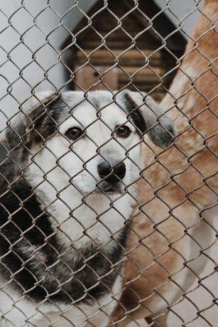 Pulpet pies ideał toleruje koty ok 4/5 letni do pilnej adopcji Sylwia