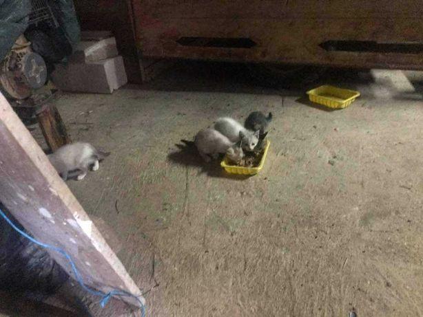 Gatinhos lindos para dar a quem cuidar
