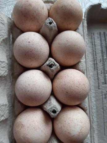 Jajka indycze eko 30 sztuk
