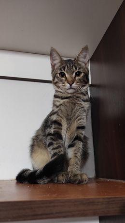 Отдам котёнка-мальчика Муската