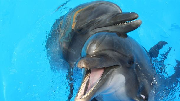 Купание с Дельфинами в дельфинарии Немо