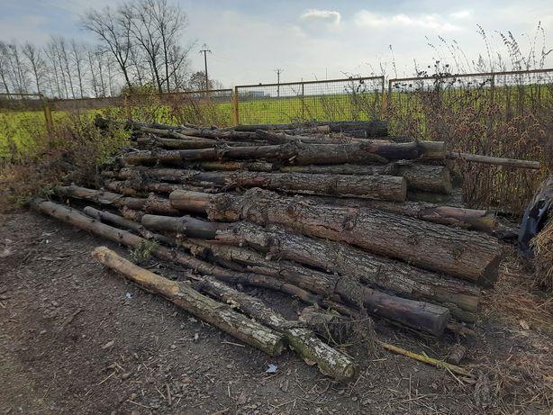 Drewno opałwe sosnowe