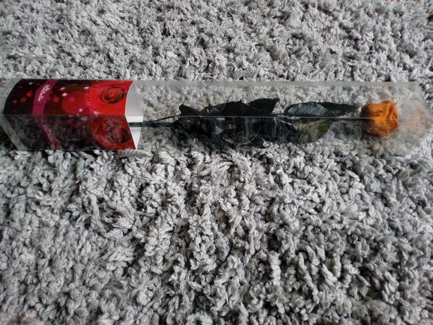 Róża wiecznie żywa