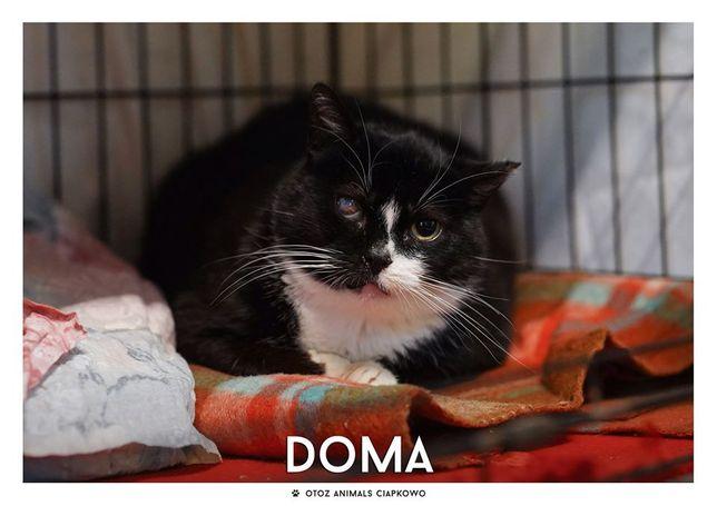 Doma - urocza koteczka czeka na dom w OTOZ Animals Ciapkowo.