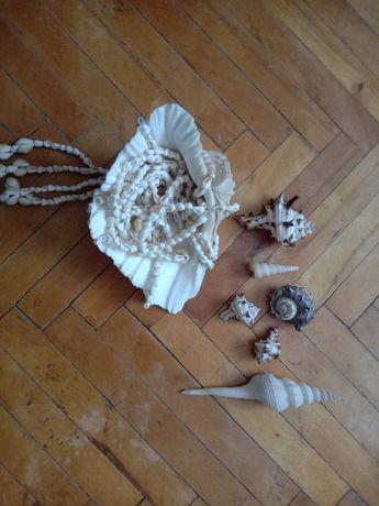 Ракушки морские красивые