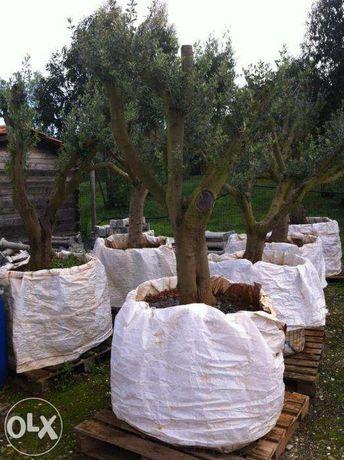 oliveiras jardim transporte domicilio